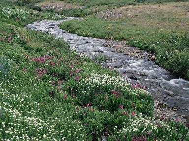 Spring Flowers and Creek